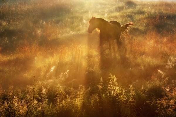 Мягкий рассеянный свет, трава, лошадь