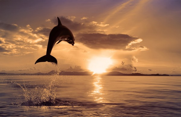 дельфин выпрыгивает из воды на фоне садящегося солнышка