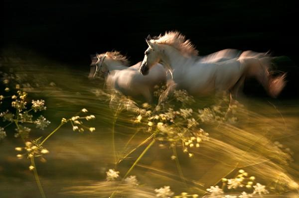 белые кони на фоне растений ;)