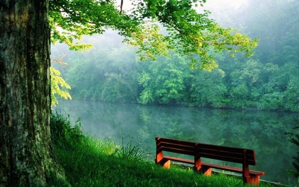 Пустая лавочка на берегу живописной лесной реки