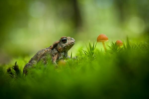 Лягушка на фоне зеленой травы и грибочков)