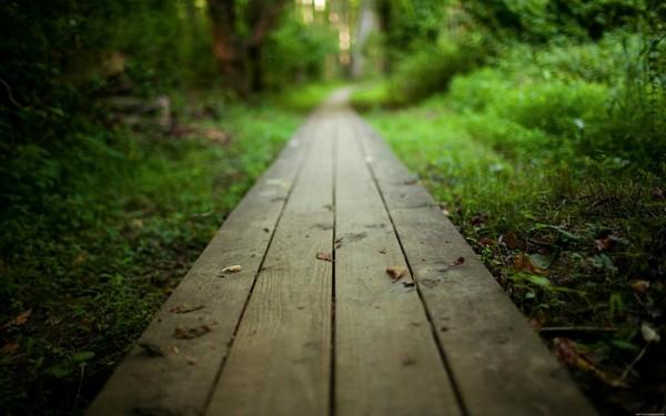 Успокаивающая деревянная тропинка