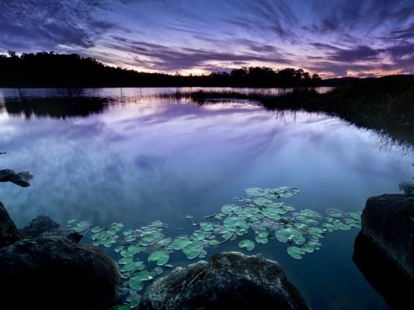 Туман над озером, фиолетовое небо, кувшинки