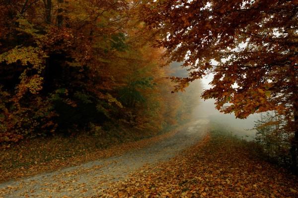 Лесное спокойствие, желтые листья, туман, глушь, осень