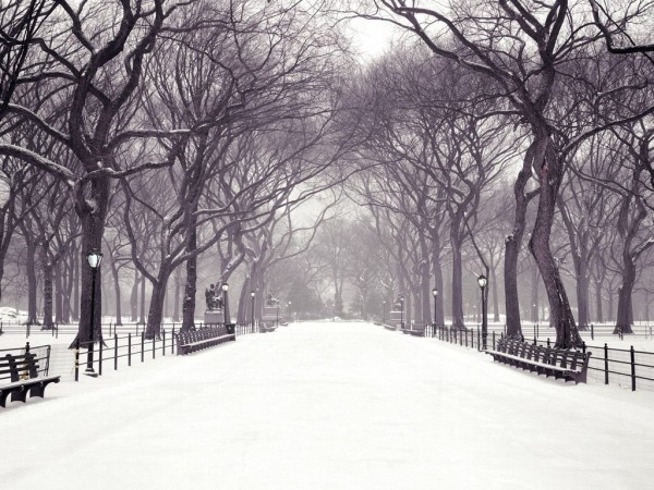 Зимняя заснеженная аллея в парке, лысые деревья, пустые лавочки